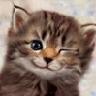 Аватар для Друкк